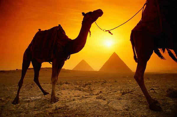 PhotoFly Travel Club | Egypt Camels | PhotoFly Travel Club