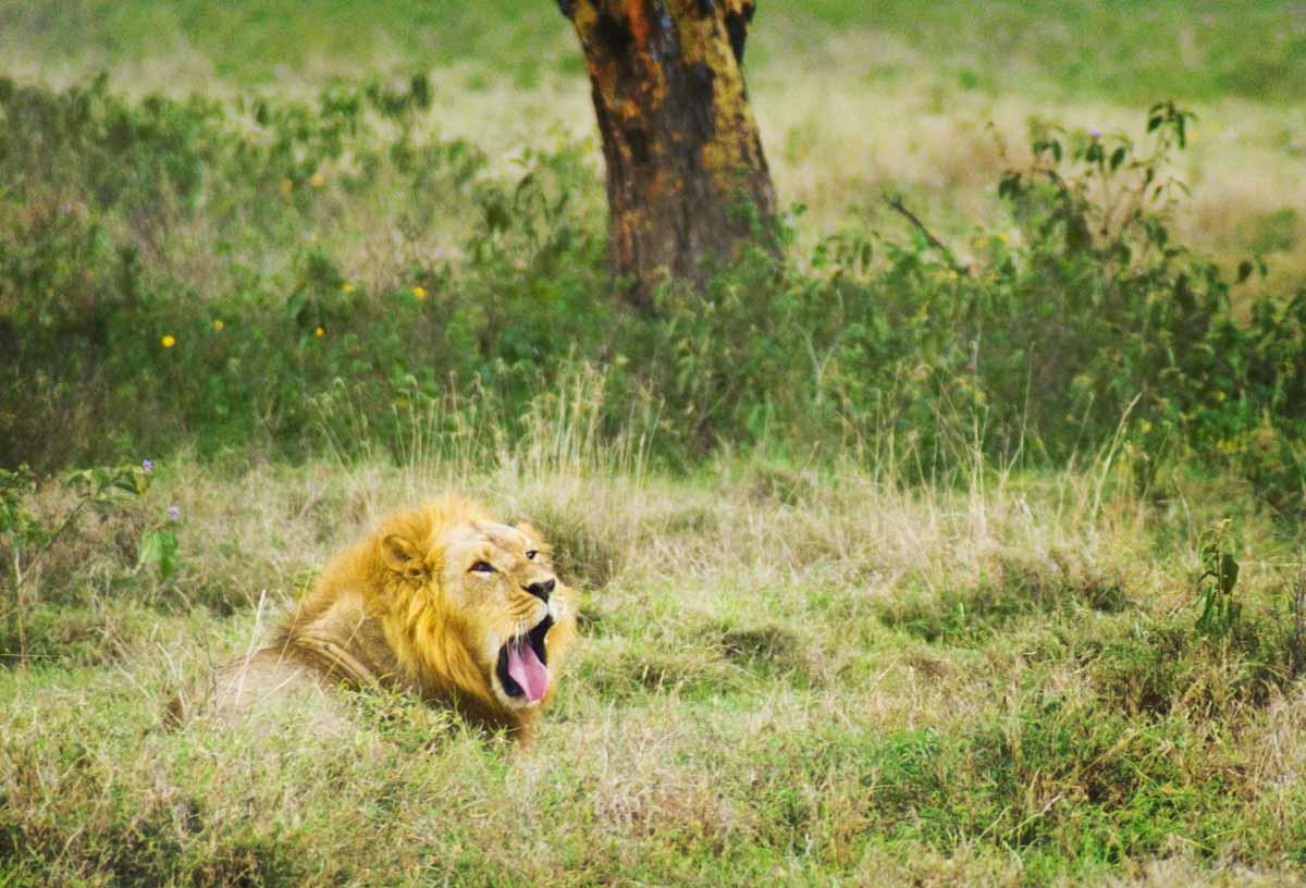 PhotoFly Travel Club | yawn | PhotoFly Travel Club
