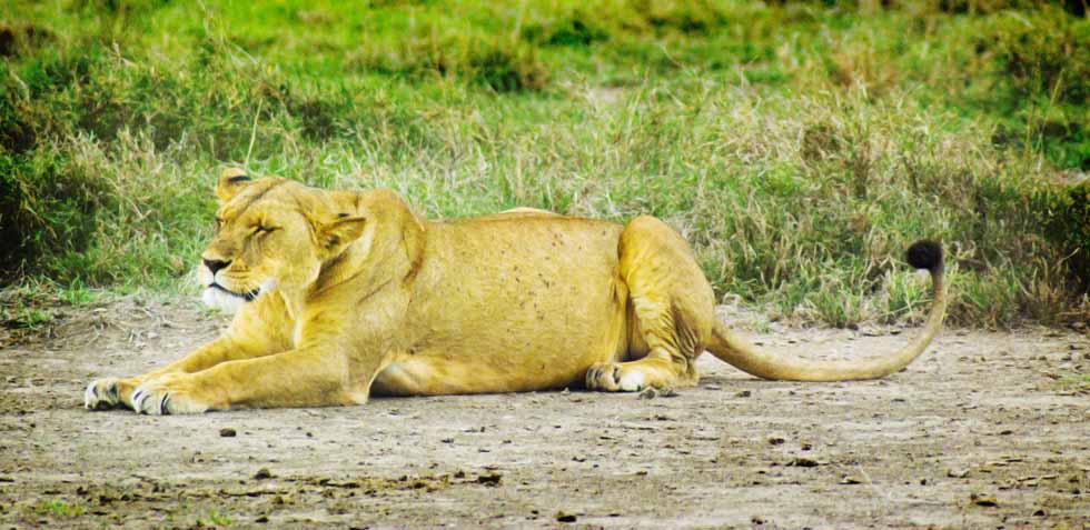 PhotoFly Travel Club | Cat Nap Kenya | PhotoFly Travel Club