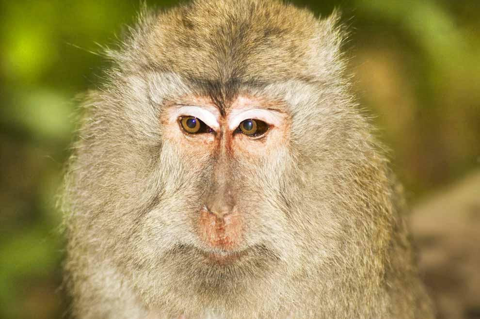 PhotoFly Travel Club | Monkey Forest Bali | PhotoFly Travel Club