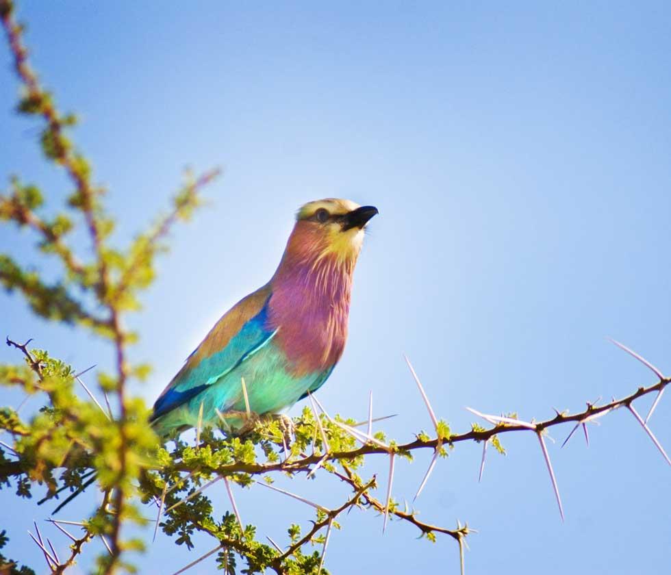 PhotoFly Travel Club | color bird 2 wp | PhotoFly Travel Club