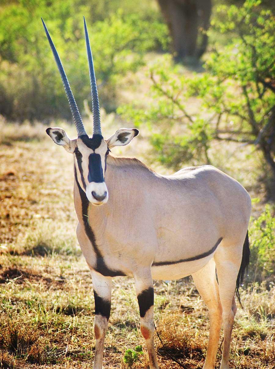 PhotoFly Travel Club   oryx   PhotoFly Travel Club