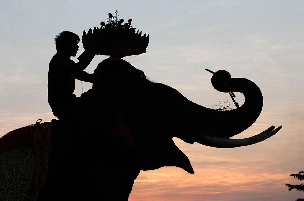 PhotoFly Travel Club | eleph sill | PhotoFly Travel Club