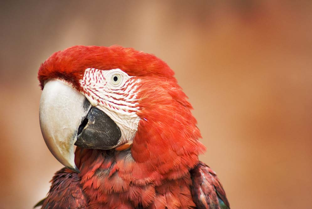 PhotoFly Travel Club | red parrot peru | PhotoFly Travel Club