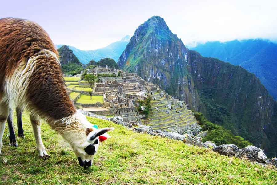 PhotoFly Travel Club   Lamas in Machu Picchu   PhotoFly Travel Club