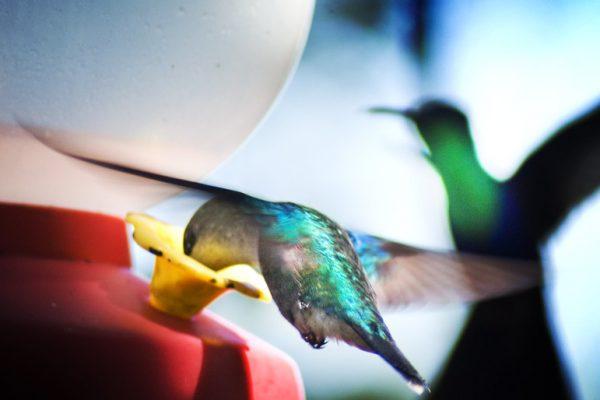 birds in CR