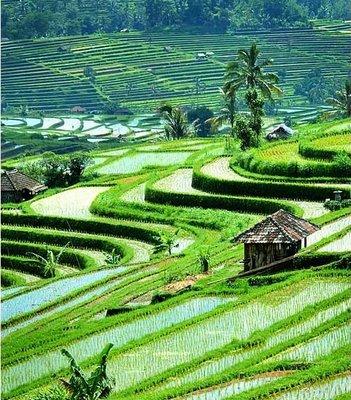 PhotoFly Travel Club   Balinese Rice Fields   PhotoFly Travel Club