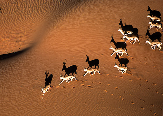 kalahari desert aeriel
