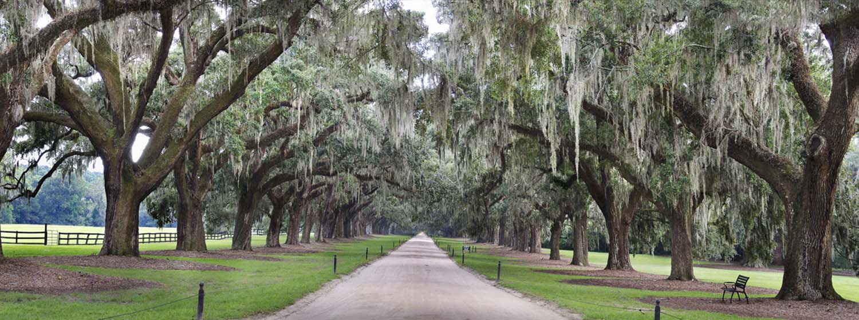 PhotoFly Travel Club | Charleston 1 Plantation trees WP | PhotoFly Travel Club