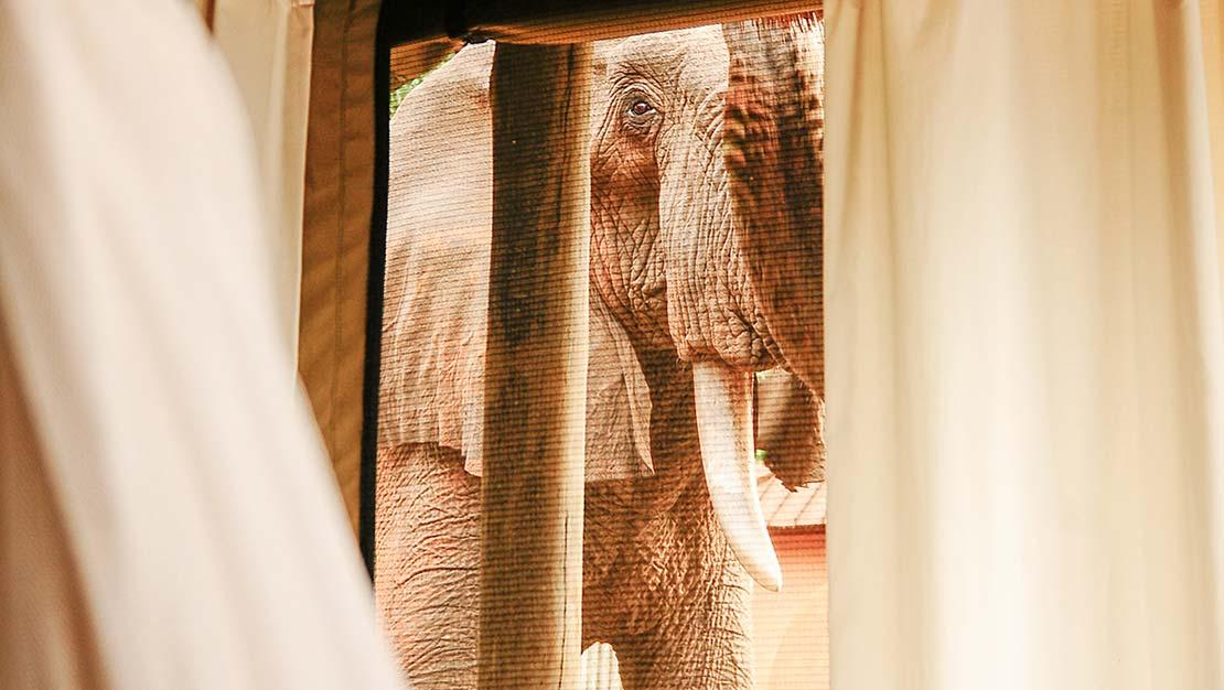 PhotoFly Travel Club | elephant room | PhotoFly Travel Club