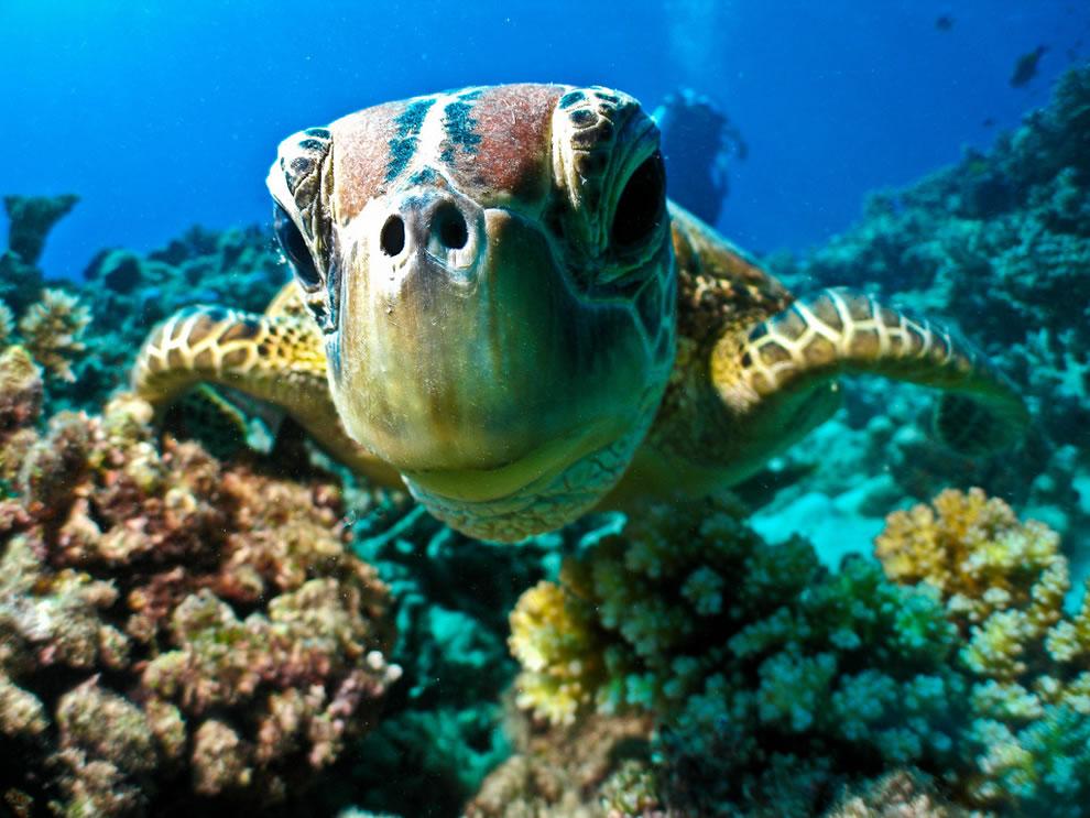 PhotoFly Travel Club | turtle | PhotoFly Travel Club