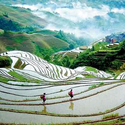 dragons backbone rice terrace