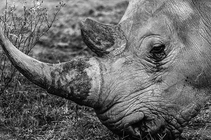 rhino entabeni