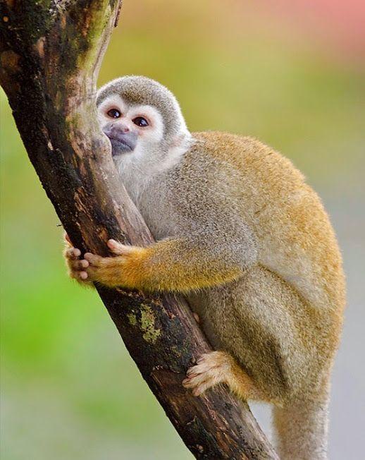 PhotoFly Travel Club | cuy monkey | PhotoFly Travel Club