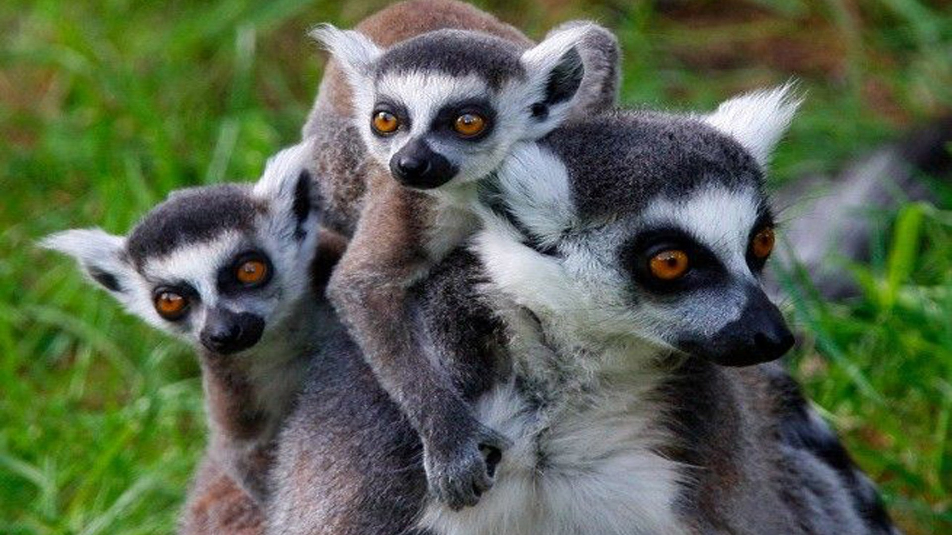 PhotoFly Travel Club | Madagascar Lemurs | PhotoFly Travel Club