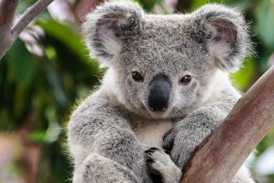 australia group tours