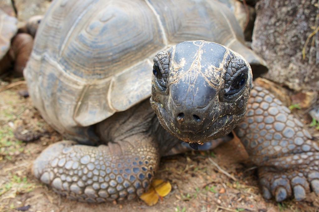 PhotoFly Travel Club | Seychelles tortoise | PhotoFly Travel Club