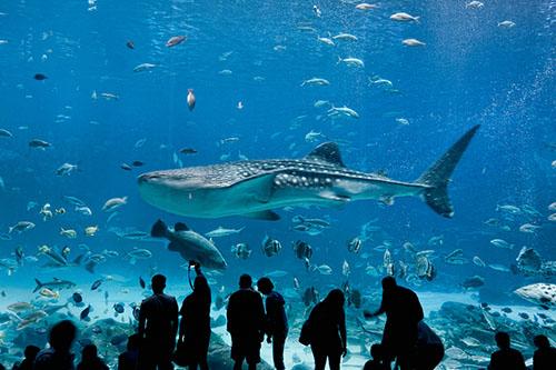 PhotoFly Travel Club | SEA | PhotoFly Travel Club
