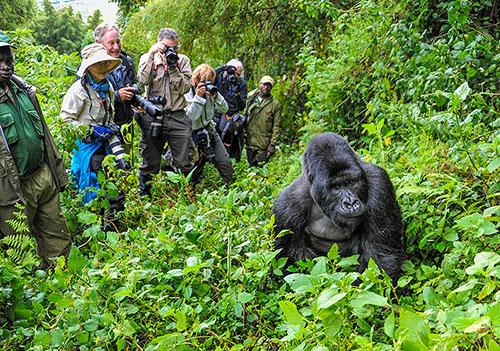 PhotoFly Travel Club | group photo gorilla | PhotoFly Travel Club