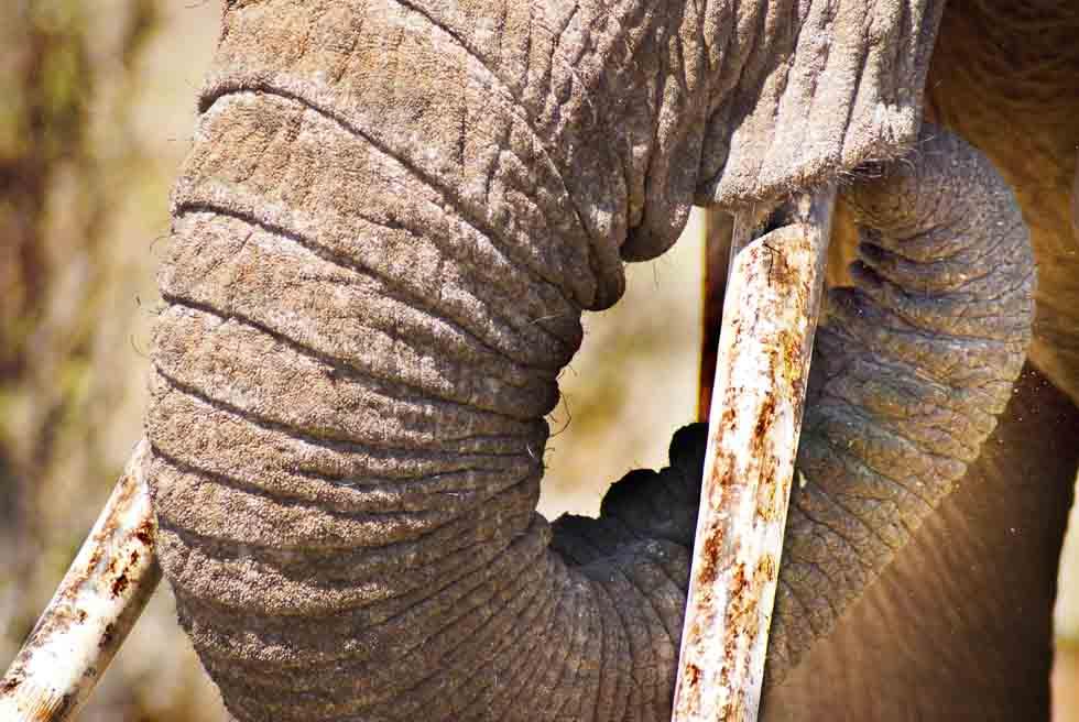 PhotoFly Travel Club   trunk wp   PhotoFly Travel Club