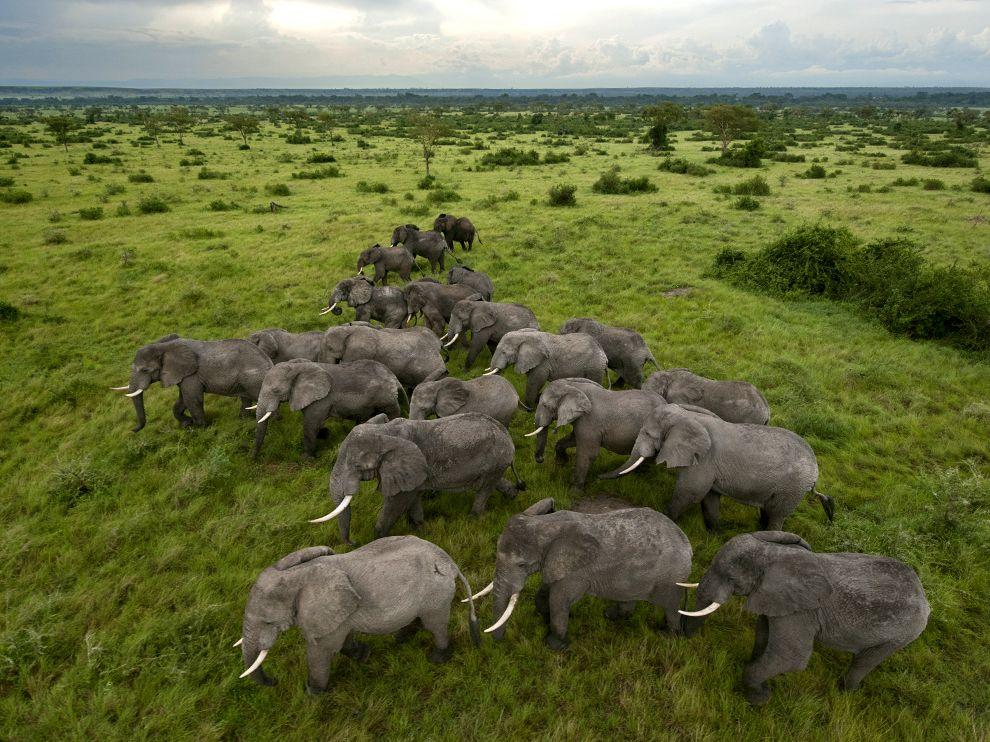 PhotoFly Travel Club | elephants-queen-elizabeth-park | PhotoFly Travel Club