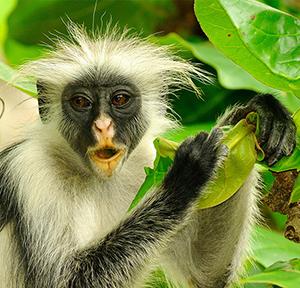 PhotoFly Travel Club | kibale-np-by-katona-tours | PhotoFly Travel Club