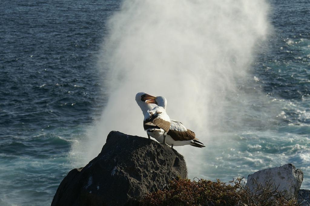 PhotoFly Travel Club | visit galapagos albatros | PhotoFly Travel Club