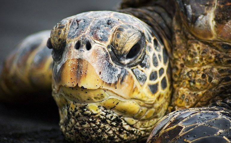 PhotoFly Travel Club | turtles-of-hawaii | PhotoFly Travel Club