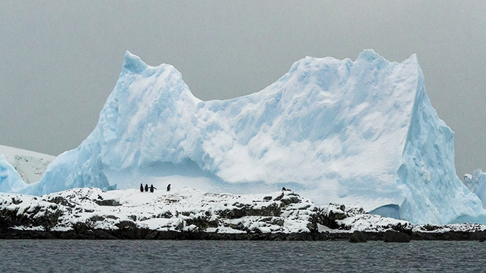 PhotoFly Travel Club | Penguin Iceberg | PhotoFly Travel Club