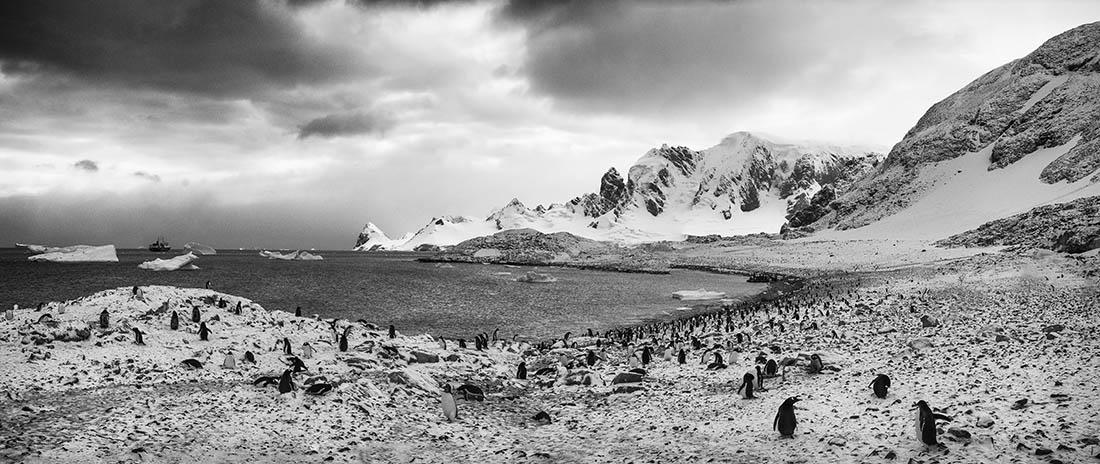 PhotoFly Travel Club | Penguin Island BW | PhotoFly Travel Club