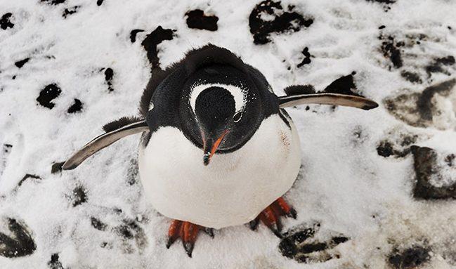 PhotoFly Travel Club   Penguin   PhotoFly Travel Club