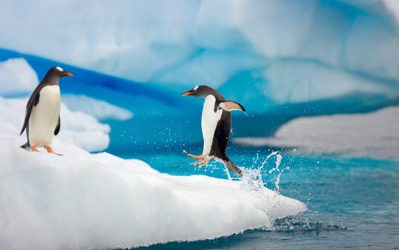 PhotoFly Travel Club | antarctica p | PhotoFly Travel Club
