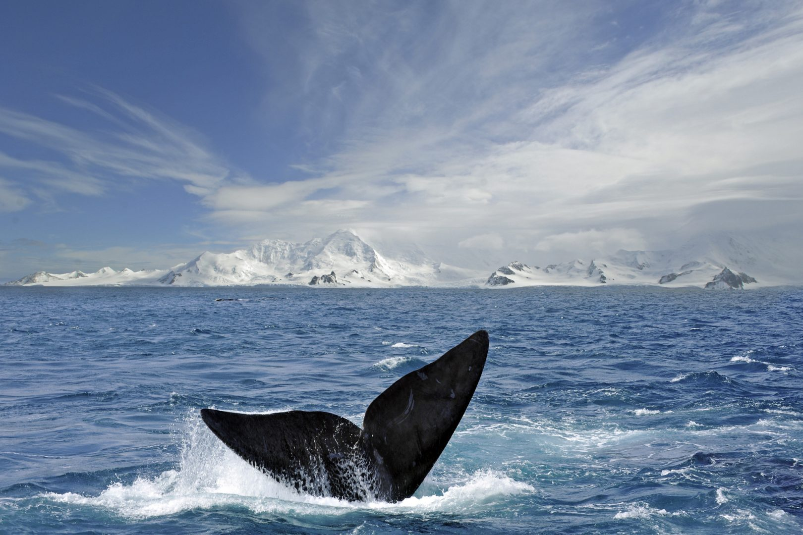 PhotoFly Travel Club | whale ant | PhotoFly Travel Club