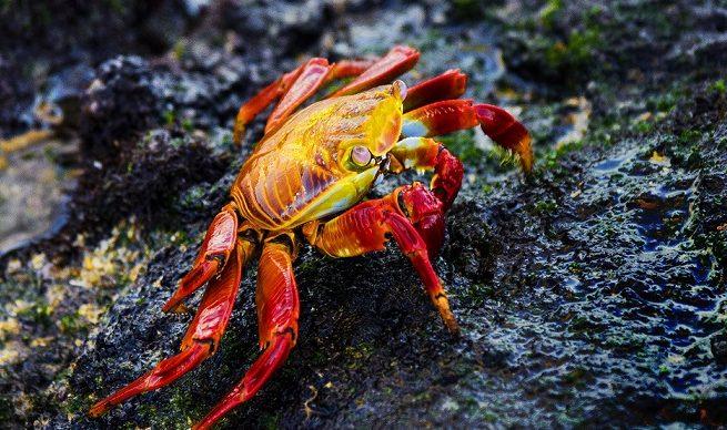 PhotoFly Travel Club | Galapagos Crab | PhotoFly Travel Club