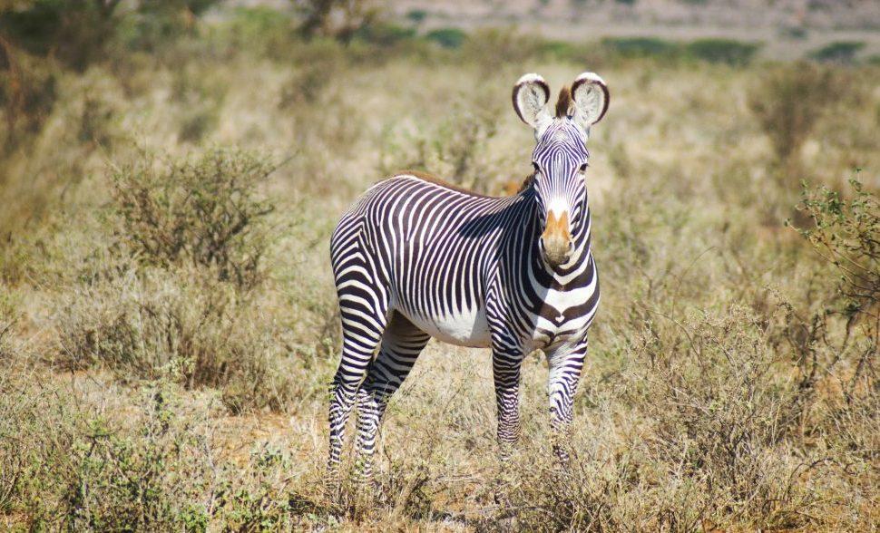 PhotoFly Travel Club | Kenya photography travel | PhotoFly Travel Club