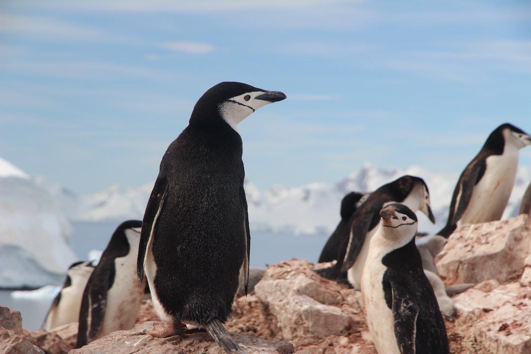 PhotoFly Travel Club | Antarctic Group Tours | PhotoFly Travel Club
