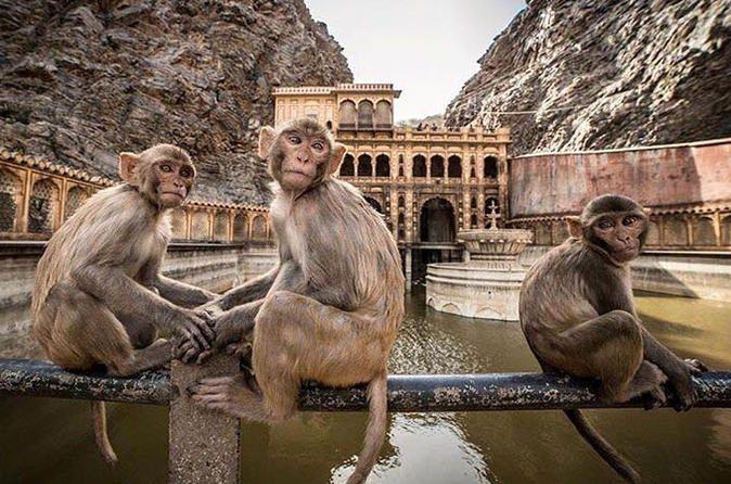 PhotoFly Travel Club | monky templ | PhotoFly Travel Club