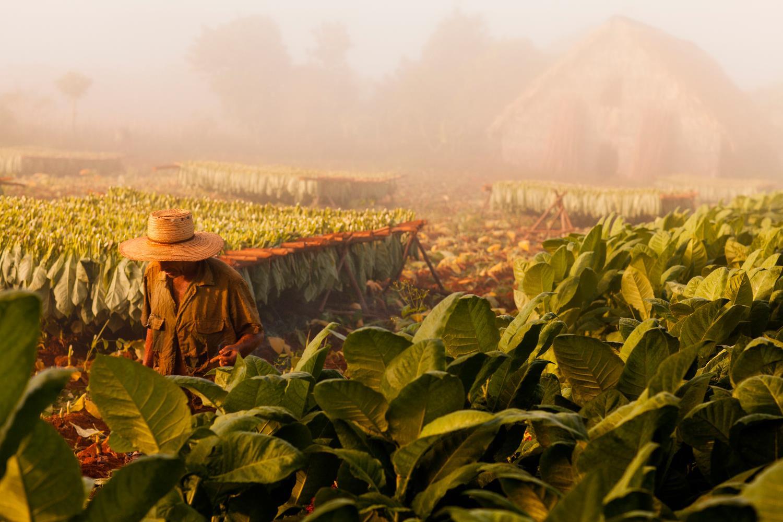 PhotoFly Travel Club | Tobacco-farming-Vinales-Copy | PhotoFly Travel Club