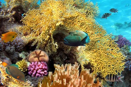 PhotoFly Travel Club | cuba snork | PhotoFly Travel Club