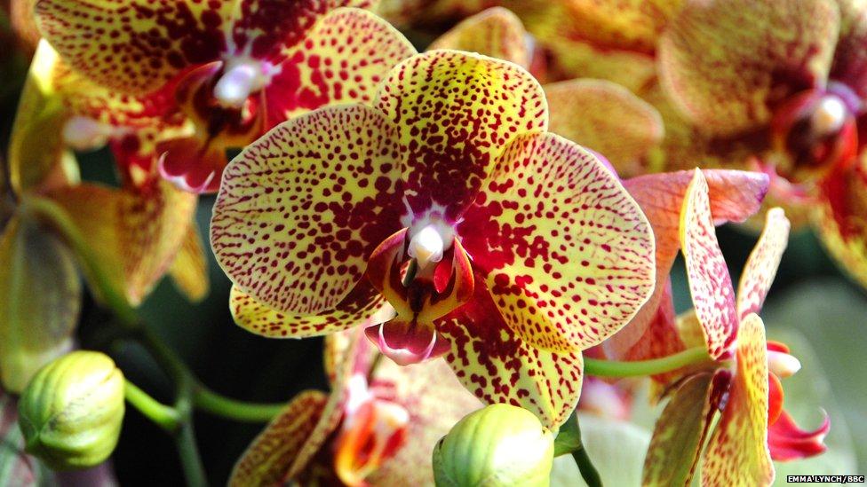 PhotoFly Travel Club   sora orchid   PhotoFly Travel Club