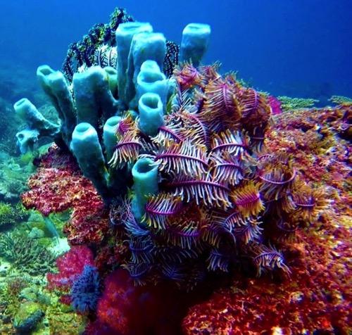 PhotoFly Travel Club   Coral   PhotoFly Travel Club
