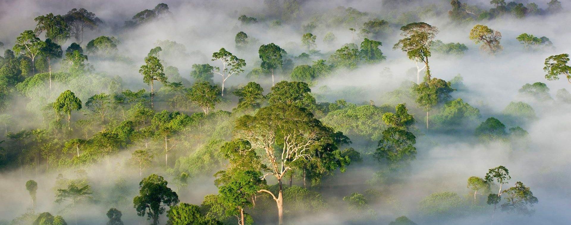 PhotoFly Travel Club | danum-valley-fog | PhotoFly Travel Club