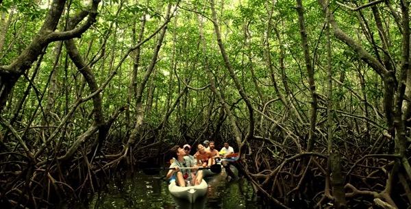 PhotoFly Travel Club   gaya mangrove kaya   PhotoFly Travel Club