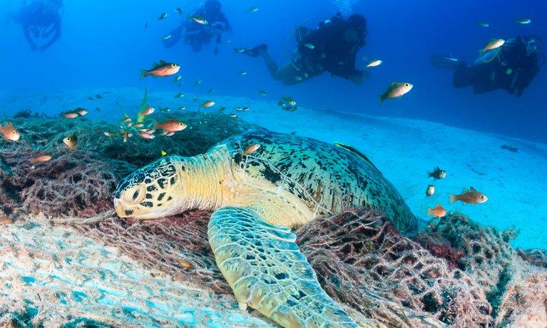 PhotoFly Travel Club   gaya snorkel   PhotoFly Travel Club