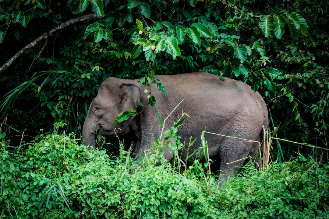 PhotoFly Travel Club | Borneo Group Tour | PhotoFly Travel Club
