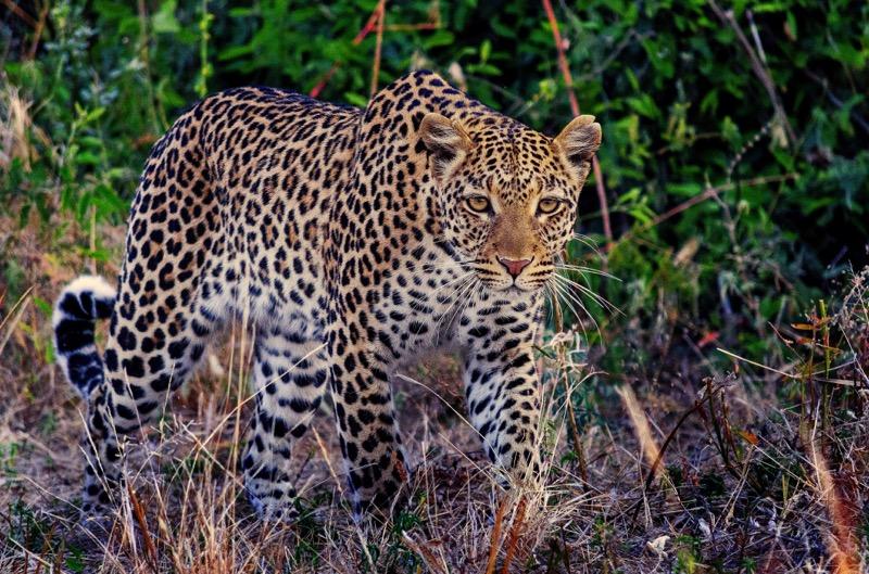 PhotoFly Travel Club | Leapord hunt | PhotoFly Travel Club