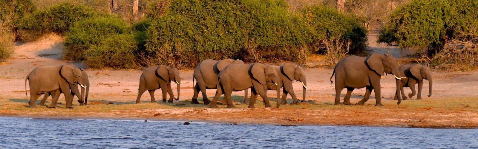 PhotoFly Travel Club | botswana trip featured imagexx | PhotoFly Travel Club