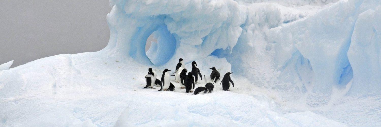 PhotoFly Travel Club | Antarctica Trip Featured Image | PhotoFly Travel Club