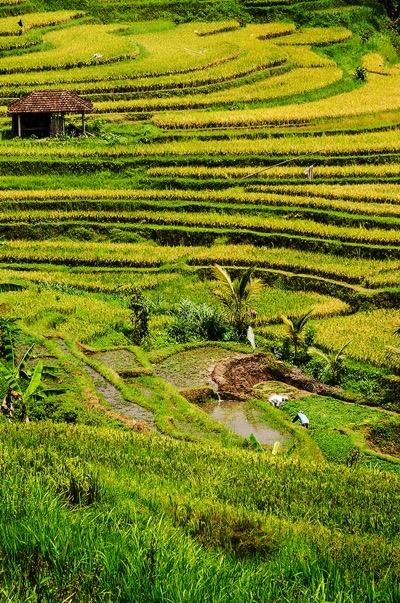 PhotoFly Travel Club | Bali fields WP | PhotoFly Travel Club