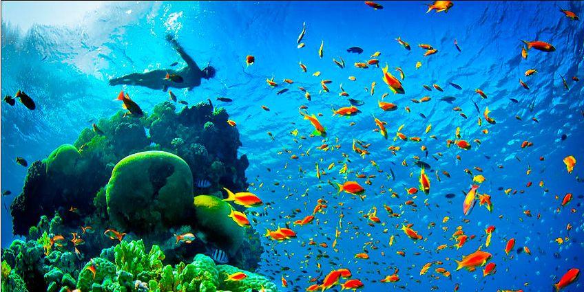 PhotoFly Travel Club | eilat snorke | PhotoFly Travel Club